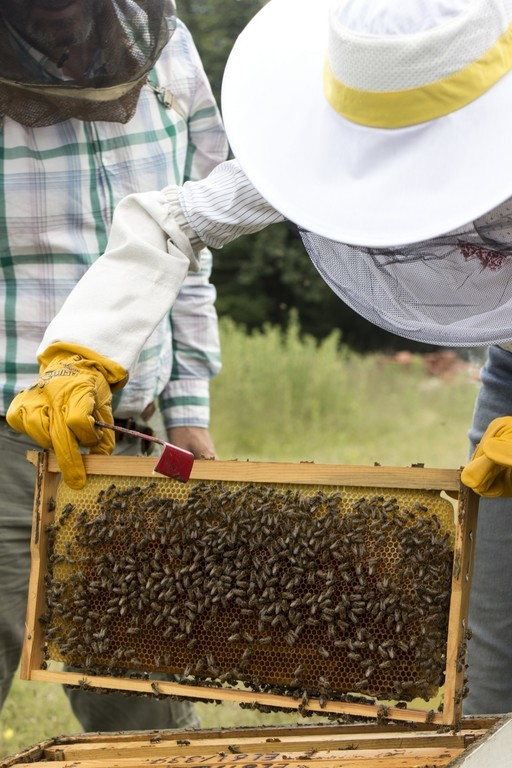ktima-bellou-beekeeping-activity-in-situ-beehive-handling